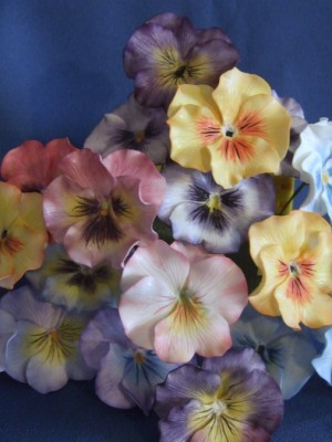 Pansies of many colors