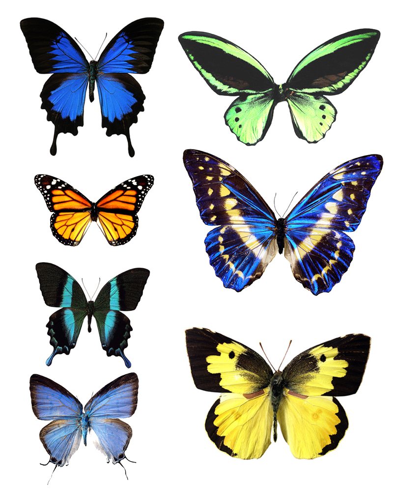 Butterfly wings template - photo#25